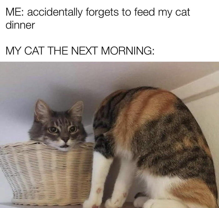 ME: accidentally forgets to feed my cat  dinner        MY CAT THE NEXT MORNING: