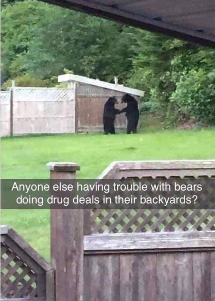 """Anyone else having trouble with bears doing drug deals in their backyards?  'OOO'QOV .""""9'9'999$§§"""