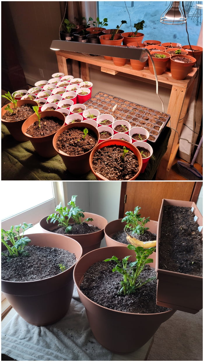 March 22. 3 weeks of gardening from the window in North Pole, Alaska.