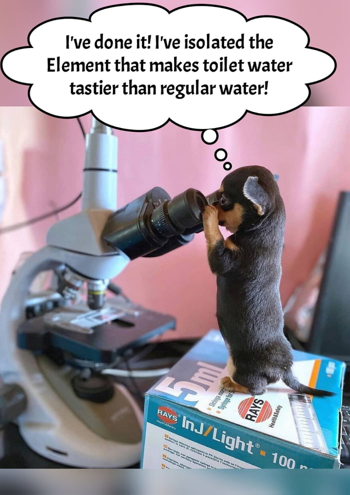 I've done it! I've isolated the Element that makes toilet water tastier than regular water!