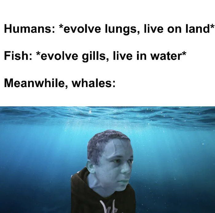 """Humans: *evolve lungs, live on land* Fish: *evolve gills, live in water*  Meanwhile, whales:  $3, , mii'fi"""""""