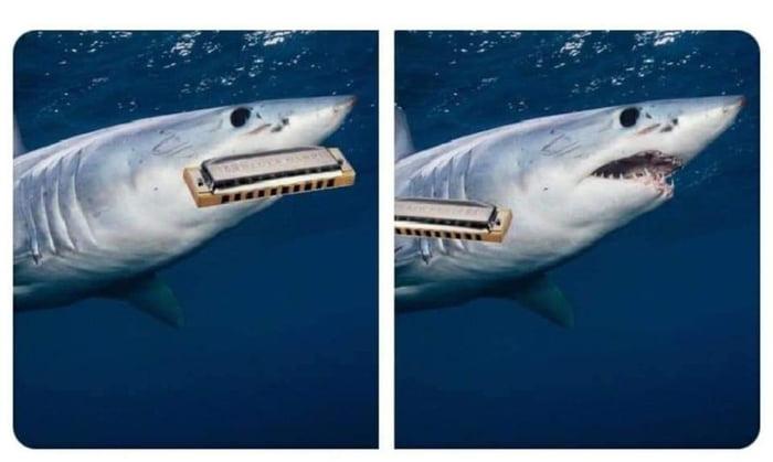 Do sharks play the harmonica like this or like this ...