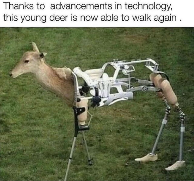 Thanks to advancements in technology, this young deer is now able to walk again .