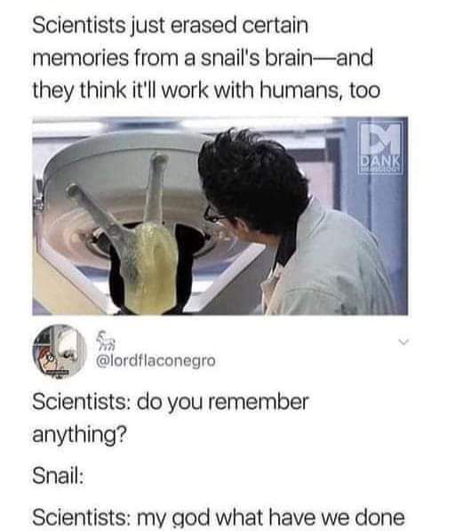Scientists just erased certain memories from a snail's brain—and they think it'll work with humans, too           r $4 (amulnaconegro  Selentlsts: do you remember anything?     Snail:  Scientists: my god what have we done
