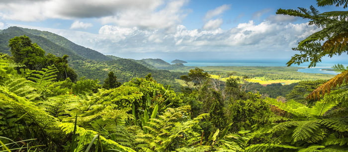 This is the Daintree Rainforest of Australia or better known as the worlds oldest forest it has been around for 180 million years