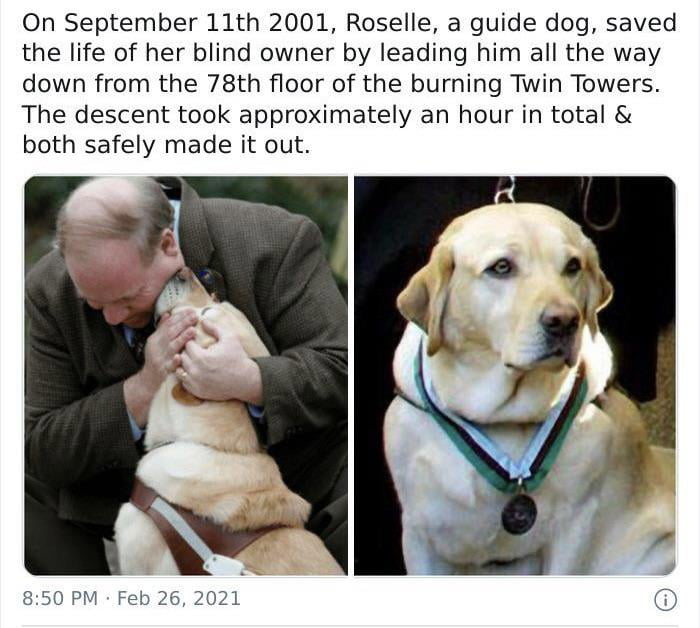 On September 11th 2001, Roselle, a guide dog, saved the life of her blind owner by leading him all the way down from the 78th floor of the burning Twin Towers. The descent took approximately an hour in total & both safely made it out.       8.50 PM Feb 26, 2021 Q