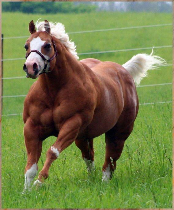 Scientists in Scandinavia have successfully bred a horse with 2 Horsepower