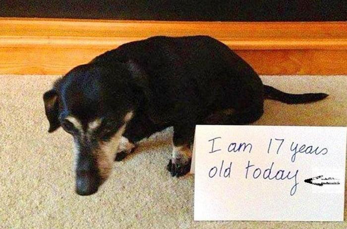 Wish-him-a-very-happy-birthday