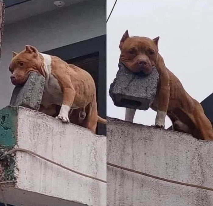 Does you dog bite? me: Nah, he just throws bricks at people