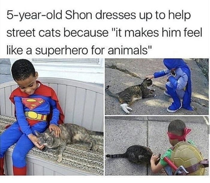 """5-year—old Shon dresses up to help street cats because """"it makes him feel  like a superhero for animals"""""""