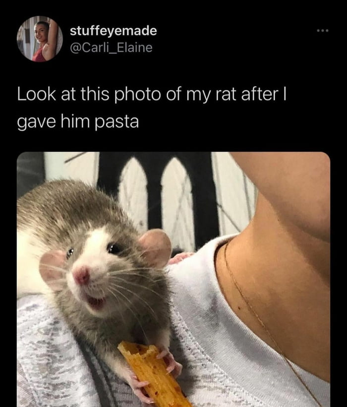 'I I [' stuffeyemade '19 ' @Carli_E|aine  Look at this photo of my rat afterl gave him pasta
