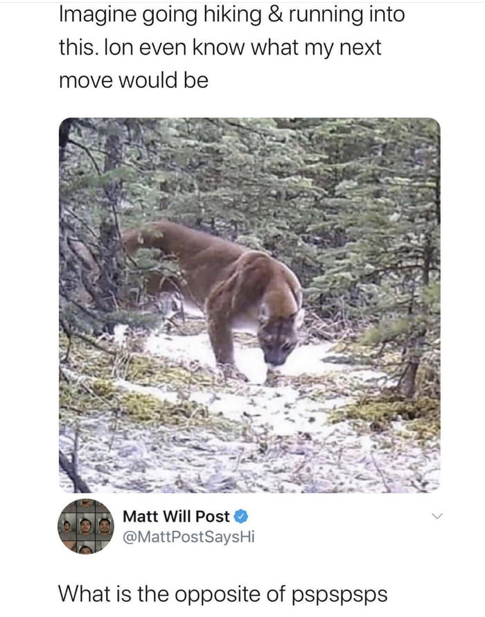 Imagine going hiking & running into this. Ion even know what my next move would be     Matt Will Post 0 v @MattPostSaysHi  What is the opposite of pspspsps