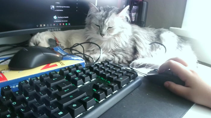 The decoy mouse is working