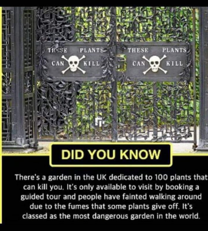 There's a garden in the UK dedicated to 100 plants that can kill you' It's only available to visit by booking a guided tour and people have falnted walking around due to the fumes that some plants give off. It's classed as the most dangerous garden In the world.
