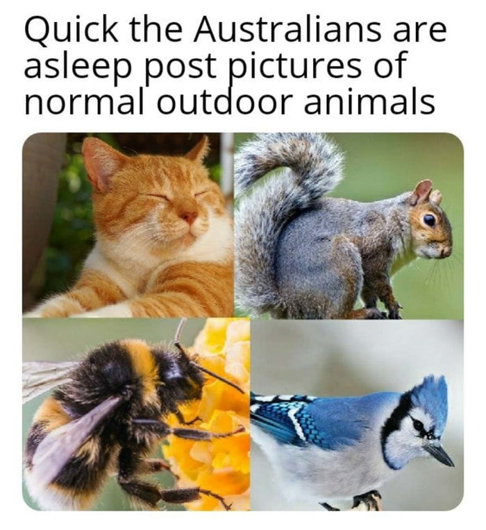 Quick the Australians are asleep post Ictures of normal out er animals