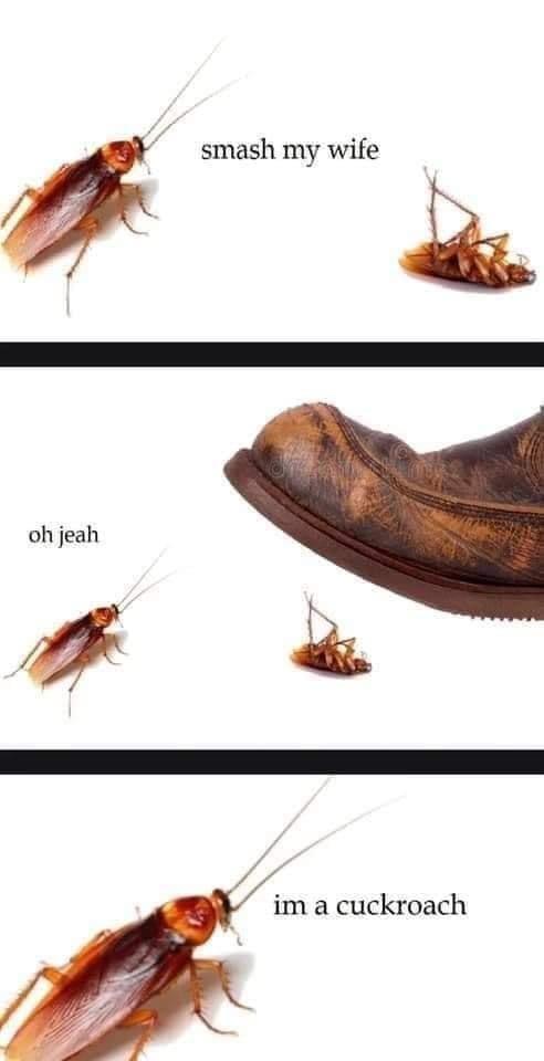smash my wife  «k     0h jeah             im a cuckroach