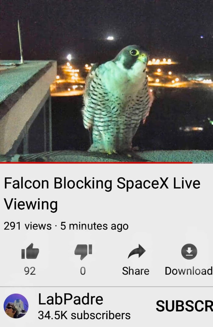 Falcon Blocking SpaceX Live Viewing  291 views - 5 minutes ago  If 9' A 9 0  92 Share Download  LabPadre 34.5K subscribers SUBSCR