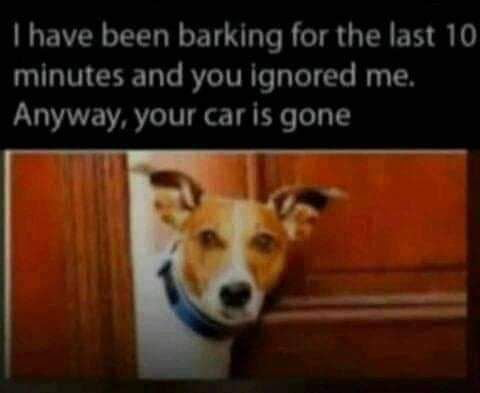 I have been barking for the last IO minutes and you Ignored me. Anyway, your car is gone