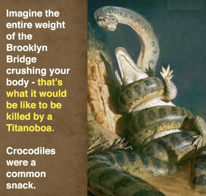 Imagine the entire weight of the Brooklyn Bridge crushing your body - that's what it would be like to be killed by a Titanoboa.  Crocodiles were a common snack.