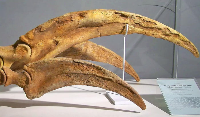 """The most striking feature of """"Therizinosaurus"""" was its claws - sharp, curved, and approximately 3 feet long. They had the longest claws of any animal in the history of life on earth."""