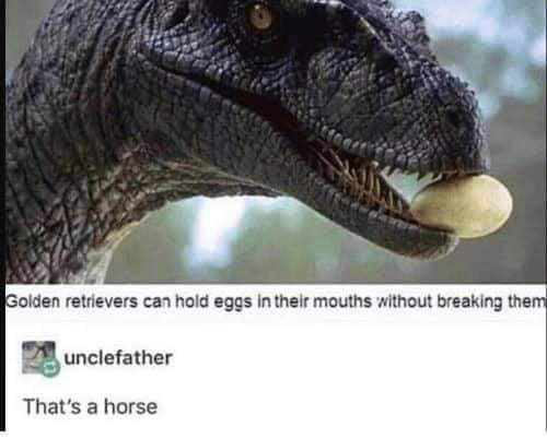 olden Iemevers CM hold :ggs lnlhelr mouths Imhoux breaking the  gunclelalher       That's a horse