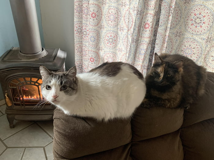 Just two little loafs hanging out by the fire